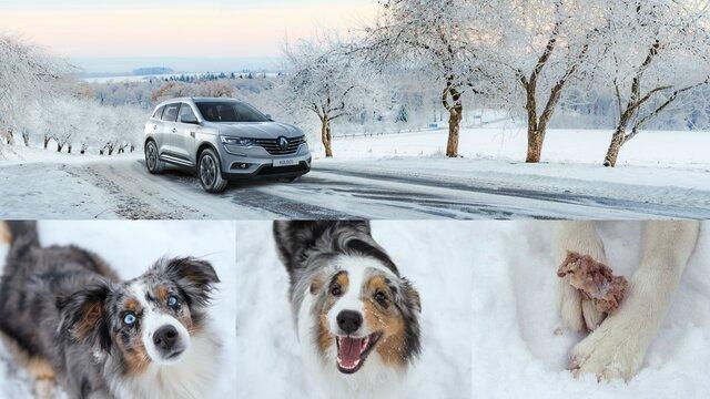 Renault Wintertipp 3