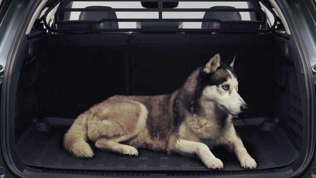 Kofferraumwanne und Kofferraumschutz - MEGANE