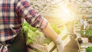 Mann transportiert Gemüsekiste