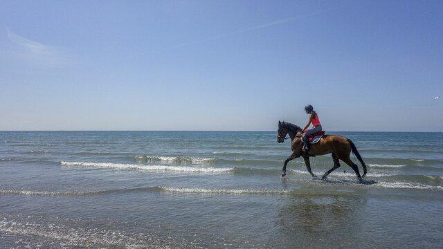 Passeio cavalo comporta