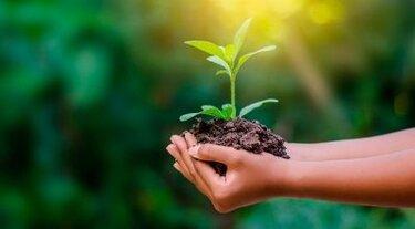 Экологическая политика